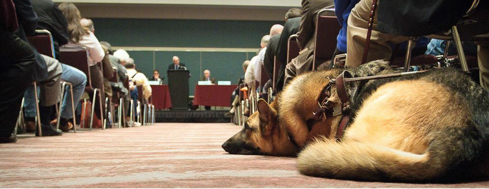 Service Dog Rests on the Floor of Conference Room During Panel